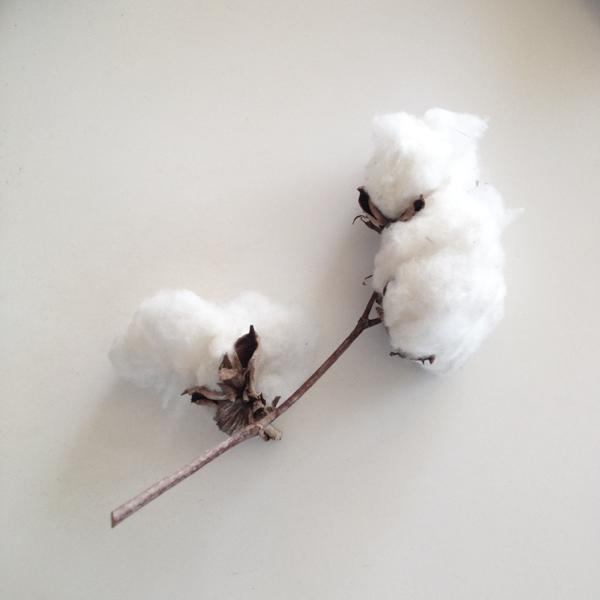 Watch This: Organic Cotton