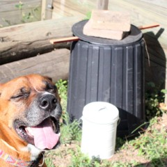 Waste Weigh Up Day 20: Composting on the Cheap