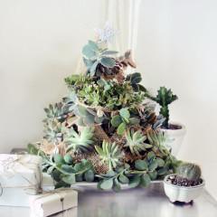 DIY: Succulent Tree