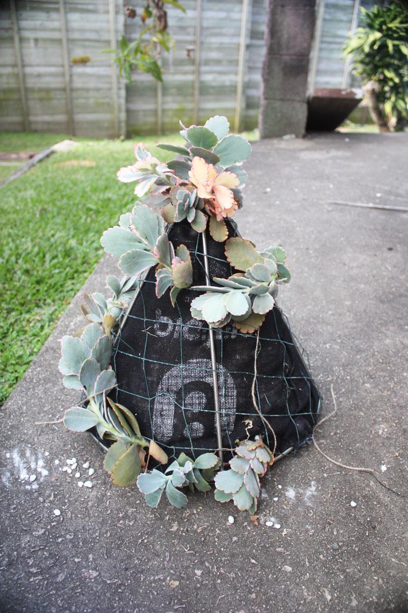 succulent_tree_5